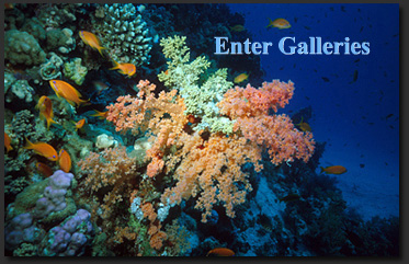 Enter Life In The Seas Galleries