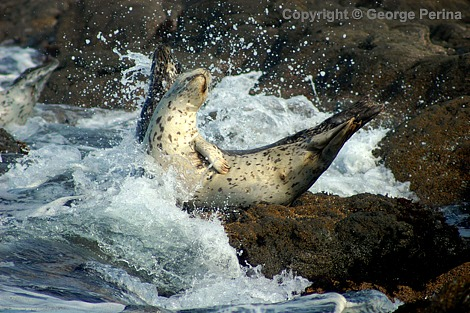 Splash Seal
